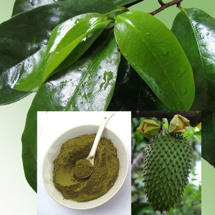 Wildwuchs Graviola Tee