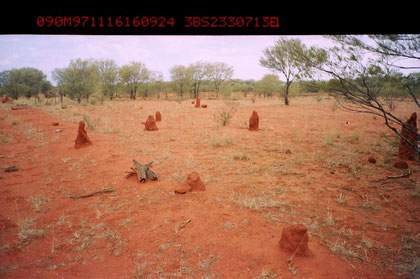 Termite mounds in Northern Territory in Australia. Photo by T. Ishiyama.
