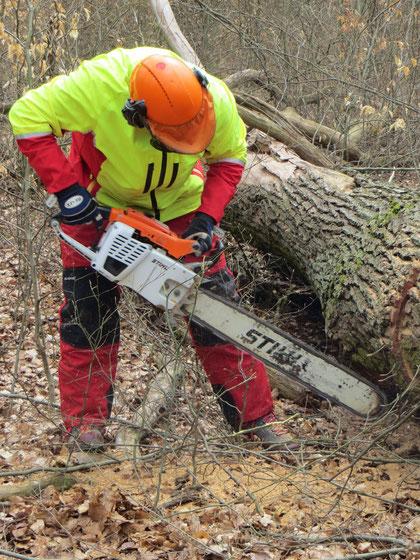 Eichenstammholz-Aufarbeitung