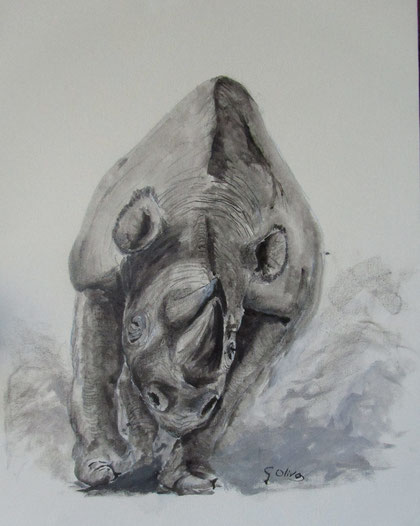 Rinoceronte nero BeN