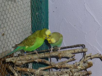 Hier hat sich eine Liebe gefunden (Ducky & Joker)