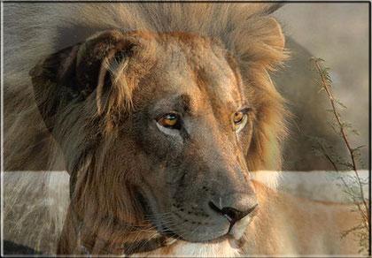 Löwenhund