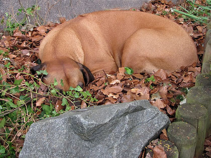 Gartenarbeit macht müde