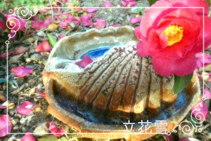 立花雪 秘密釉 YukiTachibana 山茶花