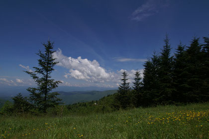 Great Smoky Mountains NP (North Carlolina und Tennessee)