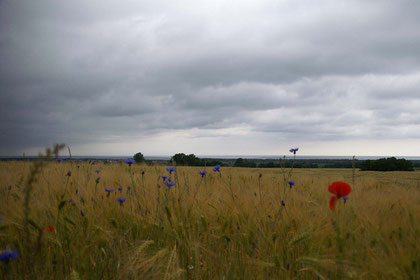 riesige Felder ... an der Ostseeküste