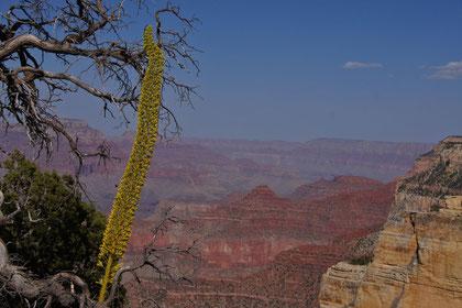 der eindrückliche, riesige Grand Canyon