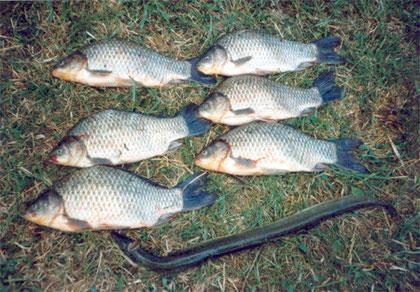 schöne Fischstrecke