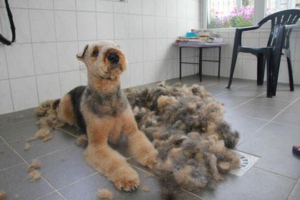 Lennox na zijn trimbeurt!!