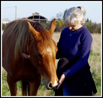 Soins cheval et communication animale Agen (47- Lot et Garonne)