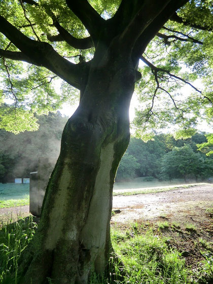 少し歩くと、木から湯気が出ていて驚いた。写真では湯気がうまく撮れていません