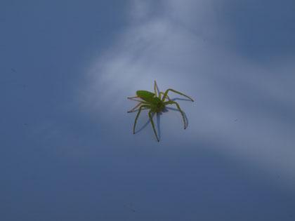 紙の上に蜘蛛の赤ちゃんらしきものが…。びっくり!