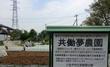 さらに北へ。西武多摩川線を越えたところに小金井市公民館主催の「共働夢農園」が。楽しそうな農作業を横目に見ながら、さらに北へ。