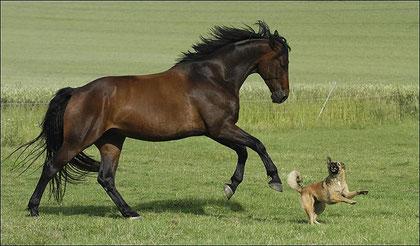Du cheval au chien