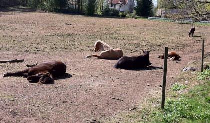 Hästarna var döda en morgon