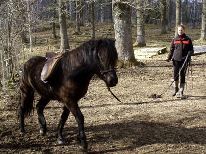 Longering med sadel och träns