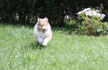 Ich kann genauso toll rennen wie mein Bruder !