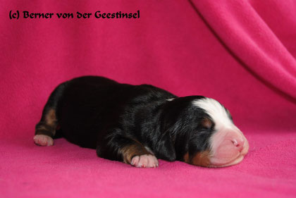 12.02.2011 - Der Erstgeborene