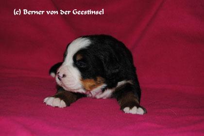 Bootsmann - 28.02.2011