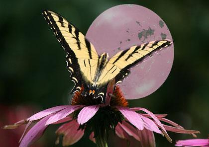 pink moon II