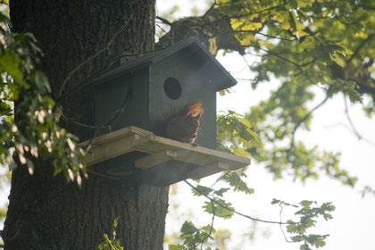 Hörnchen auf der Veranda (Anklicken zum Vergrößern)