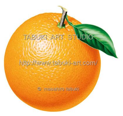 オレンジ RD_10514
