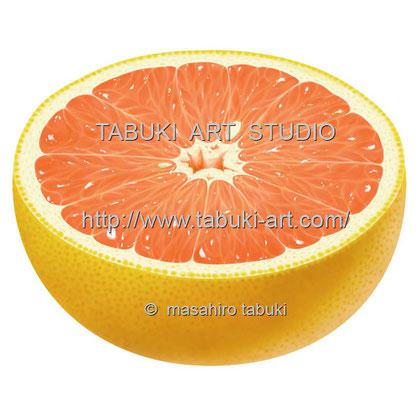 グレープフルーツ ピンク pink grapefruit ストックイラスト レンタルイラスト