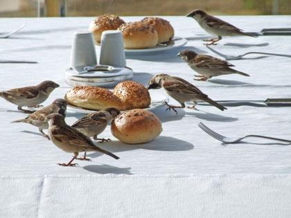 Mittel gegen Vögel