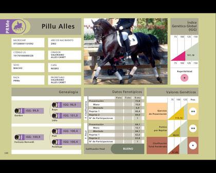 Fiche de Pillu Alles, étalon Pure Race Minorquine - Discipline : dressage classique