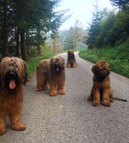 Yaris, Ally, Cliff, Arthur
