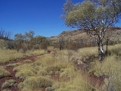 Pilbara Landscape - Reference for 5 Steps to Get You Started DVD