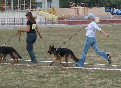 Айрес(Арекс Бендер Ланд-Фортуна фон Гульвиг)-6БП в кл.щенков сук из 9 собак(кадр увеличивается при нажатии)
