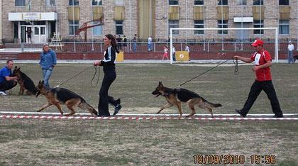 Мафия Норд Шторм и Бине Кристал Буш-1 и 2 место в кл.юн.сук из 7 собак(кадр увеличивается при нажатии)