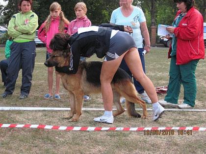Карли Бендер Ланд(Халлюкс ф.Бату-Келли Украиниан Ланд)-2 место из 10 собак в кл.мол.(кадр увеличивается при нажатии)