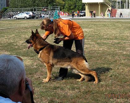 Халлюкс фон Бату-победитель рабочего класса из 10 собак