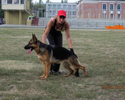 Богиня ф.Вишбург(Халлюкс ф.Бату-Полицейская Собака Матильда)-1БП в кл.сук-подростков из 9 собак