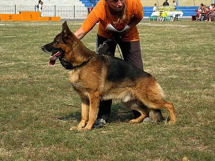 Халлюкс фон Бату-победитель рабочего класса из 10 собак.