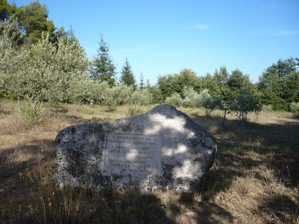Olivenhain der Stiftung Longo Mai