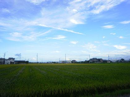 弥富の空、田んぼを吹き抜ける風は超気持ちよかったです♪