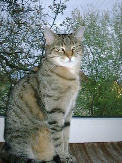 Lisa auf der Fensterbank