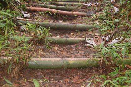 Bambus ist offenbar nicht tot zu bekommen