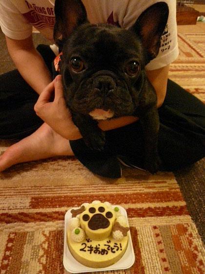 お誕生日おめでとうwwプリオ満2歳になりました^ー^