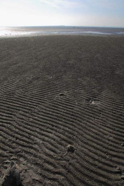 風紋ならぬ、波紋が美しい ゆっくり潮が引くからできるのかな