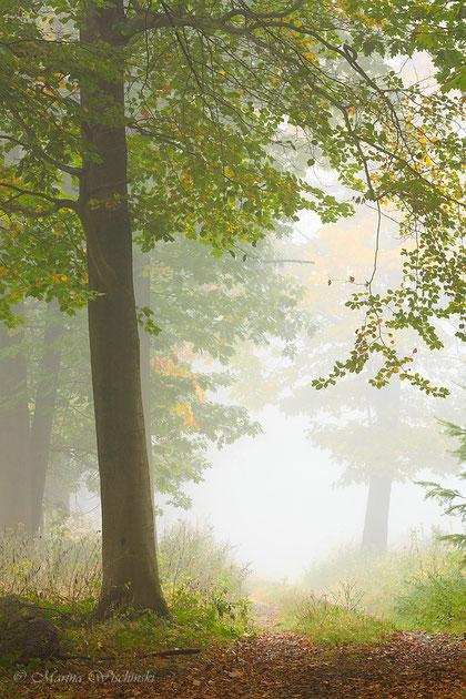 Frischer Nebel