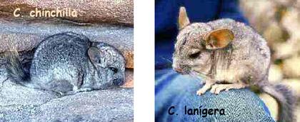 Imágenes extraídas de Wikipedia