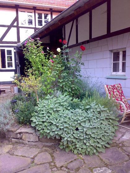 Rondell mit Salbei, Buchsbäumchen, Hibiscus und Oregano