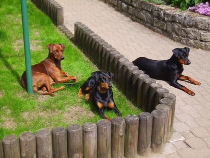 Onnie,Sally und Geeva beim Sonnenbaden