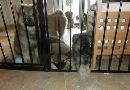 Morgens: die Bärchen sind auf der Terrasse u. davor - bald kommt die Tierärztin !