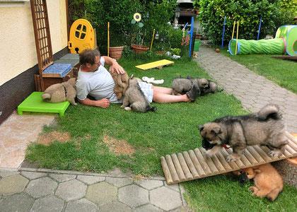 Das ist eine Freude, wenn das Züchterherrchen heimkommt und mit uns spielt!