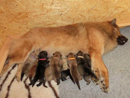 Mama Bia und ihre 10 kleinen Bärchen ... die allerbeste Mama!
